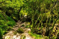 Тихий след водя к лесу в солнечности Стоковое фото RF