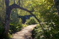 Тихое место в древесинах Стоковые Фото