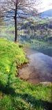Тихое озеро в предыдущей весне Стоковые Фотографии RF