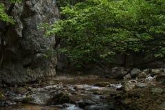 Тихое река в парке Стоковые Изображения RF
