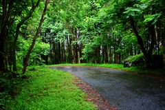 Тихое road2 Стоковое Изображение