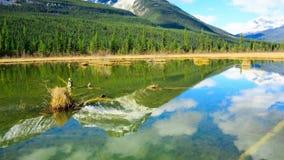 Тишь и живописное канадское озеро сток-видео