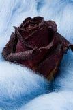 тканье неба близкого красного цвета сини розовое вверх по вину шерстяному Стоковое Фото