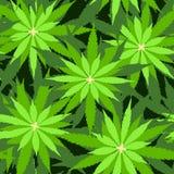 Ткань зеленой травы лист марихуаны картины иллюстрации вектора предпосылки марихуаны безшовной наркотическая иллюстрация вектора