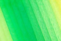 Ткань Organza Стоковые Фото