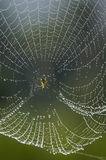 Ткач росы Стоковая Фотография RF