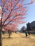 токио весны Стоковая Фотография