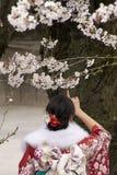токио вишни цветений стоковые изображения
