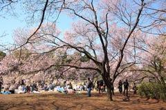 токио в марше вишни торжества 2010 цветений Стоковое Изображение RF