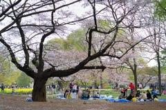 токио сезона вишни цветения Стоковые Изображения