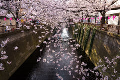 Токио, Япония на сезоне канала Meguro весной Стоковые Фото