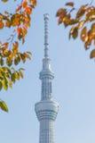 Токио, Япония - 14-ое ноября 2016, дерево неба токио Стоковое Фото