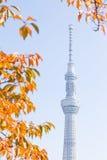 Токио, Япония - 14-ое ноября 2016, дерево неба токио Стоковое Изображение