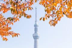 Токио, Япония - 14-ое ноября 2016, дерево неба токио Стоковая Фотография RF