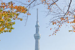 Токио, Япония - 14-ое ноября 2016, дерево неба токио Стоковые Изображения RF