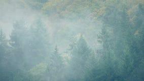 Толстый туман двигает над ландшафтом леса видеоматериал