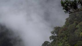 Толстый туман и дым леса двигая в гору видеоматериал