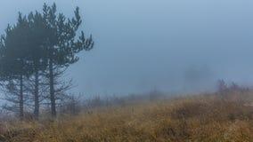 Толстый туман на наклоне Стоковое Изображение