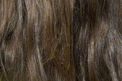 толщиная коричневых волос крупного плана роскошная Стоковое фото RF
