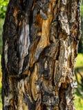 Толщиной, грубая, текстурированная расшива дерева стоковые изображения rf