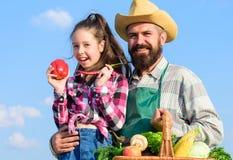 Только фермер органического и свежего человека сбора бородатый деревенский с ребенк Отец и дочь сбора семьи фермера доморощенный стоковое фото