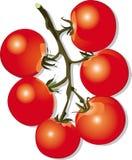 томаты ветви Стоковые Фотографии RF
