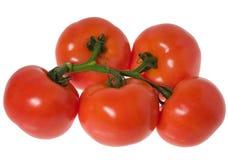 томаты ветви Стоковые Изображения