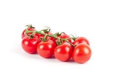 томаты вишни ветви свежие зрелые Стоковая Фотография