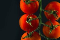 томаты вишни ветви свежие зрелые Стоковое Изображение RF