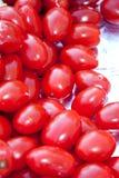 томаты вишни Стоковые Фото
