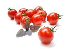 томаты вишни Стоковое Изображение RF