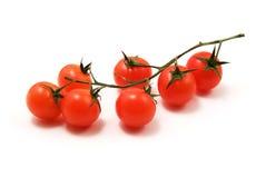 томаты вишни Стоковое фото RF