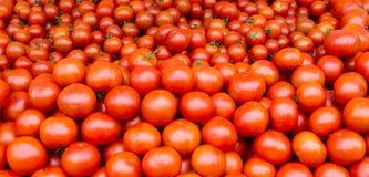 томаты дисплея свежие Стоковое Изображение