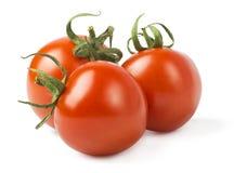 томаты изолированные предпосылкой белые стоковые изображения