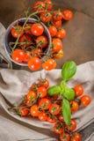 томаты красного цвета вишни малые стоковое фото