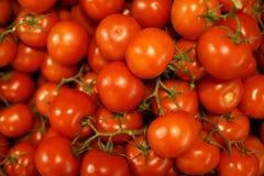 томаты красного цвета вишни предпосылки Стоковое Изображение