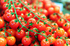 томаты красного цвета вишни Стоковое Изображение RF