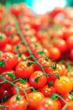 томаты красного цвета вишни Стоковая Фотография RF