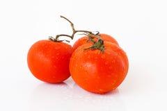 томаты красного цвета 3 Стоковые Изображения RF