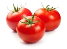 томаты красного цвета 3 Стоковая Фотография RF