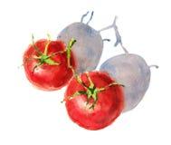 Томаты на руке Painted иллюстрации еды акварели лозы изолированные на белой предпосылке Стоковая Фотография RF
