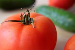 томаты огурцов Стоковая Фотография