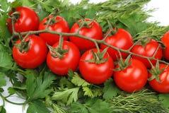 томаты петрушки пука зеленые Стоковое Фото