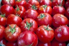 томаты предпосылки свежие Стоковые Фотографии RF