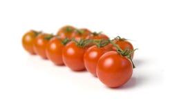 томаты пука Стоковая Фотография