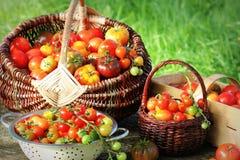 Томаты разнообразия Heirloom в корзинах на деревенской таблице Красочный томат - красный, желтый, апельсин Зачатие сбора vegetabl Стоковые Изображения