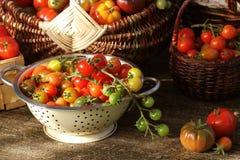 Томаты разнообразия Heirloom в корзинах на деревенской таблице Красочный томат - красный, желтый, апельсин Зачатие сбора vegetabl Стоковые Фото