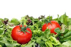томаты салата Стоковое Фото