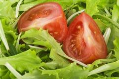 томаты салата Стоковая Фотография