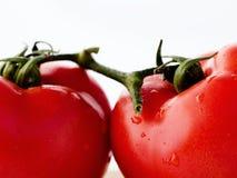 томаты соединенные ветвью Стоковая Фотография